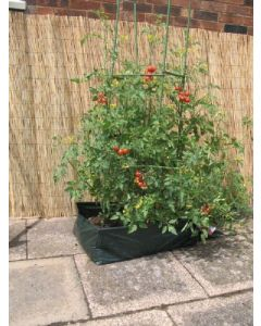 Botanico Lets Grow Tomato Planter Kit